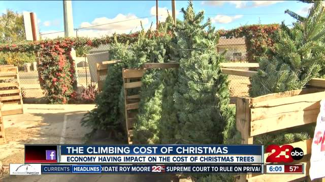 christmas tree prices rising this year turnto23com bakersfield ca - Cost Of Christmas Tree
