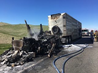 Semi carrying cows catches fire, slows traffic