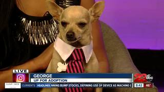 23ABC Pet of the Week