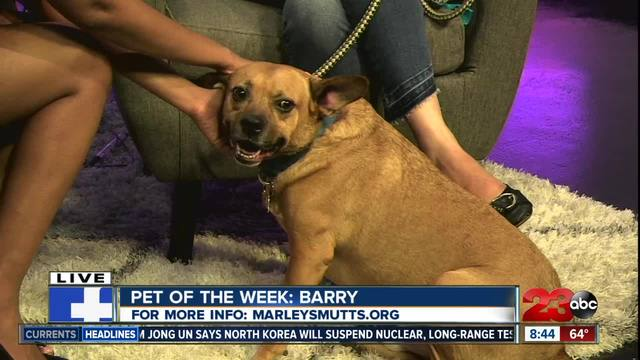23ABC Pet of the Week- Berry