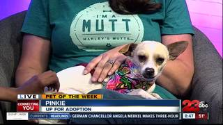 23ABC Pet of the Week: Pinkie
