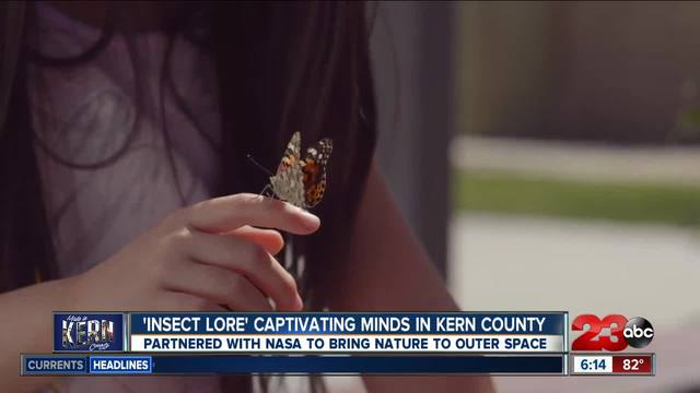 Made in Kern County- Insect Lore