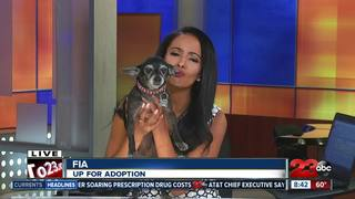 23ABC Pet of the Week: Fia
