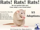 KCAS offers rat adoption