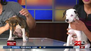 23ABC Pets of the Week: Brown Baron and Snoopy