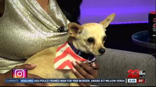 23ABC Pet of the Week: Pimi