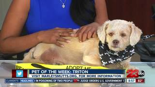 23ABC Pet of the Week: Triton