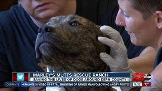 Marley's Mutt rescue thriving after severe burns