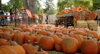 Made in Kern County: Banducci Family Pumpkin...