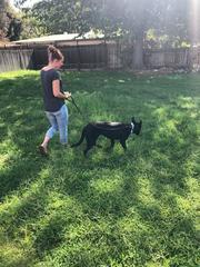 Bakersfield family nurses stray dog back to...