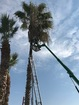 Good Samaritan helps rescue man from a palm tree