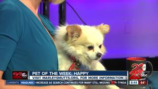 23ABC Pet of the Week: Happy