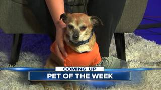 23ABC Pet of the Week, Dallas!